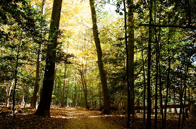 Greensprings forests in Fall